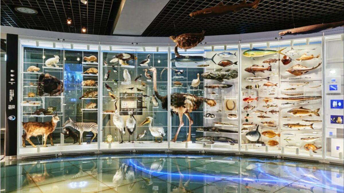 Национальный музей науки Японии. Токио